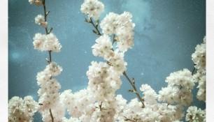 2011-03-21_1300731997