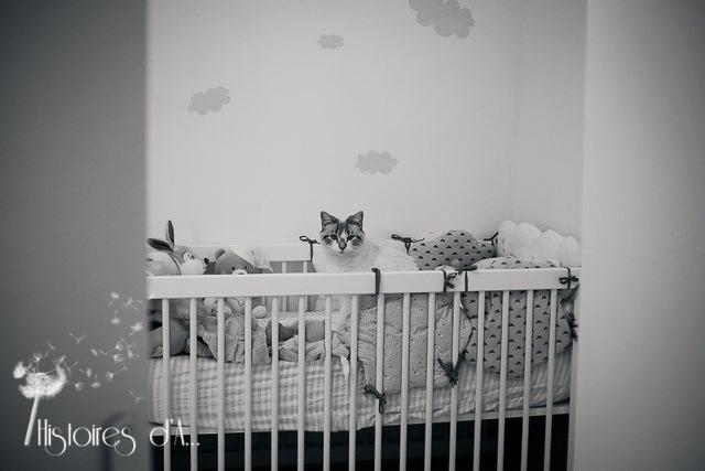 séance photo nouveau-né - histoires d'a photographe (1)